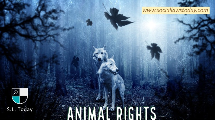 Time To Recognise Animal Rights